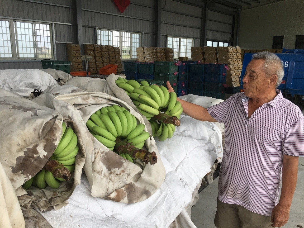 今年因有外銷助益,品質穩定的香蕉價格都不差,雲林產地價每公斤約20至25元。記者...