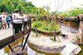 歷經13年打造 北市動物園熱帶雨林館 開幕