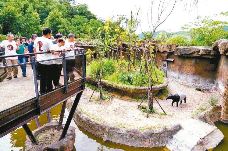 台北市立動物園「熱帶雨林館」今開幕,民眾可近距離觀賞珍稀動物。 圖/台北市政府提...