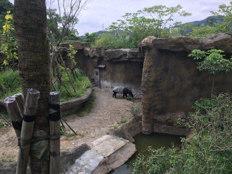 台北市立動物園「熱帶雨林館」今開幕,民眾可近距離觀賞珍稀動物。記者張世杰/攝影