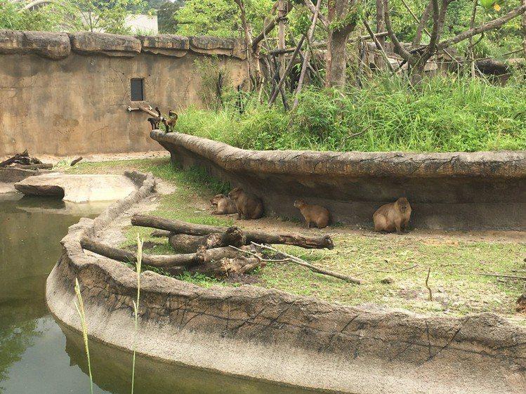 台北市立動物園的「熱帶雨林館」今開幕,民眾可近距離觀賞珍稀動物。記者張世杰/攝影