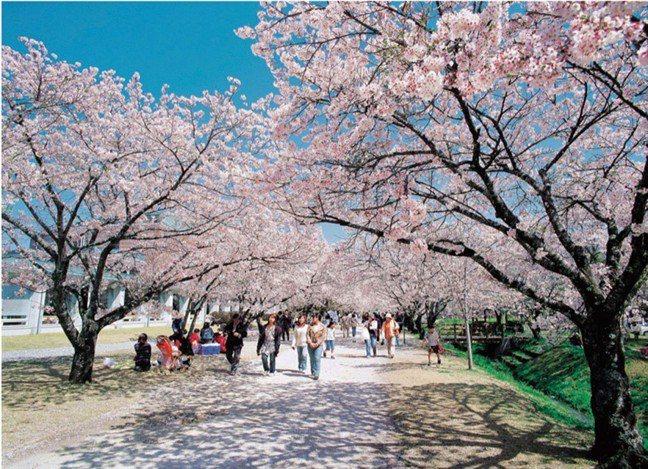 位在高知縣香美市的鏡野公園是日本櫻花百選,也是高知縣內著名賞櫻景點。 資料提供/...