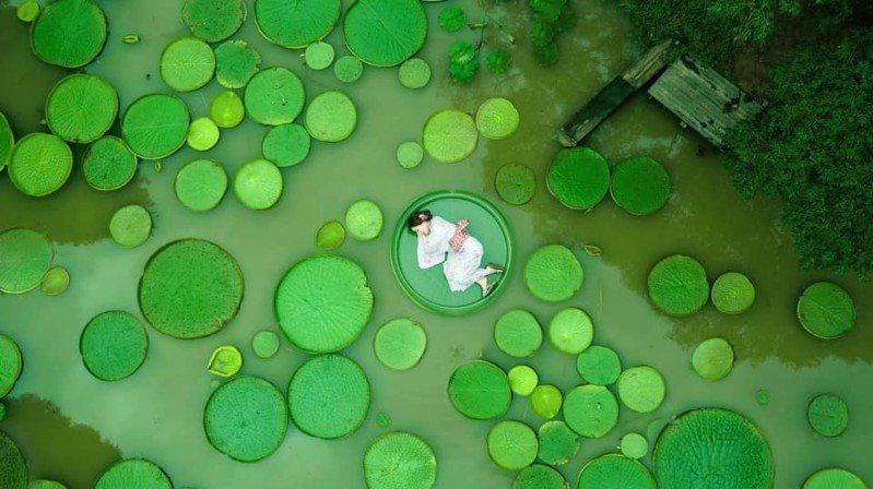 圖/超仙蓮花美景,快來桃園蓮花季。日本藝人清新小百合授權