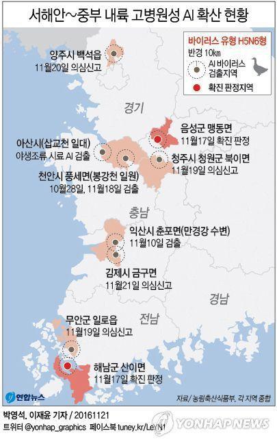當時的禽流感,在全韓國都有養雞場中標。照片來源︰연합뉴스。