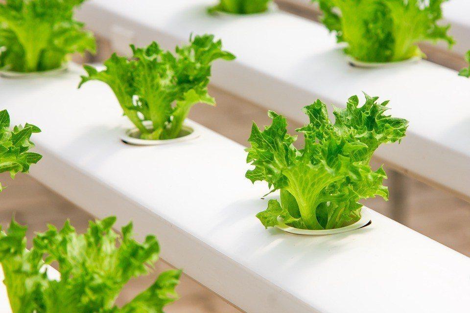 水耕種植系統不使用農藥或是除草劑。 圖/Pixabay