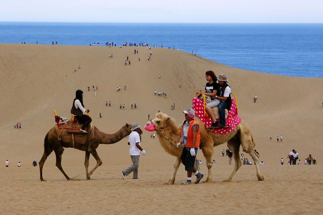 華信航空將飛台中到日本鳥取航線,圖為鳥取砂丘騎駱駝。圖/華信航空提供