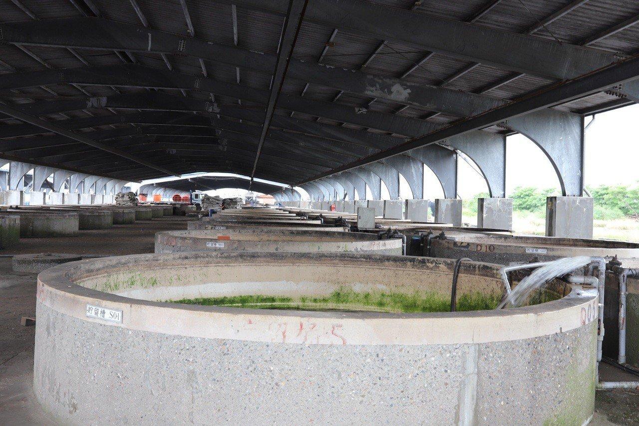 大埤鄉醃漬專區216座醃漬槽將不再續租。記者李京昇/攝影