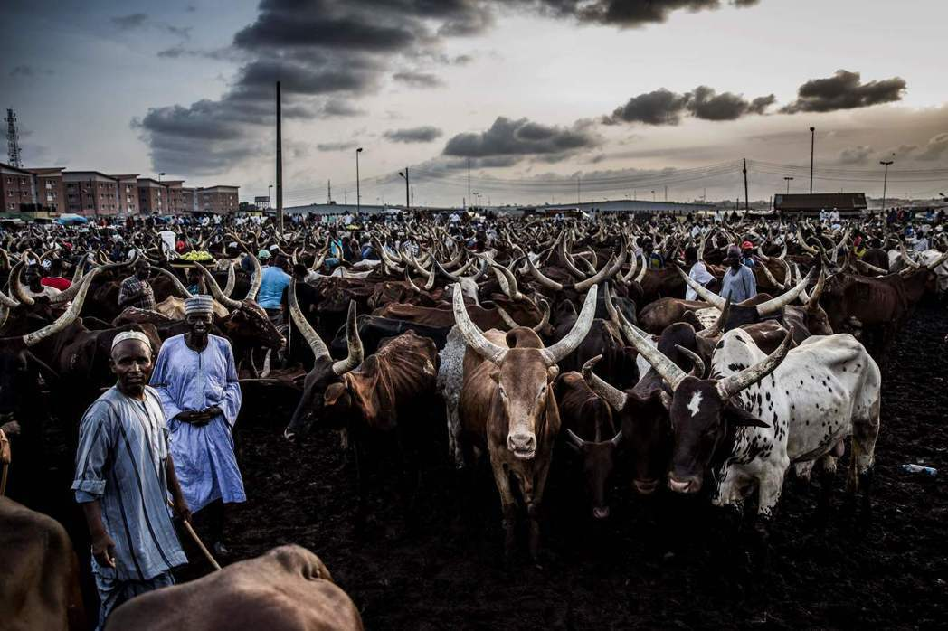 圖為從事畜牧業的非洲遊牧民族富拉尼人以及長角牛。有些區域組織成員國已受益於與區外...