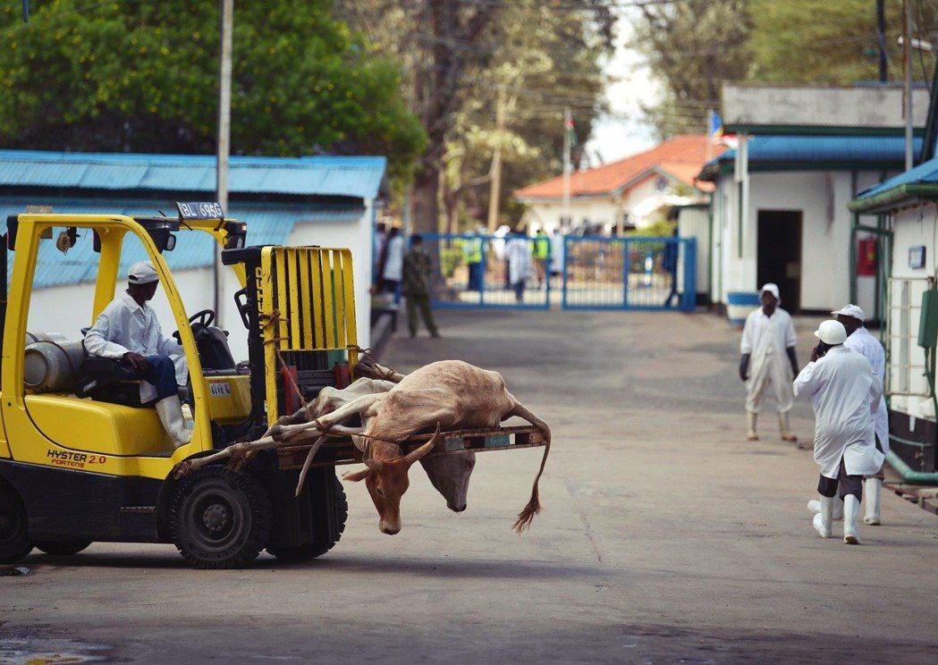 肯亞屠宰場。有學者研究表明,農業自由化將使非洲內部農業貿易增加28.8%,對世界...