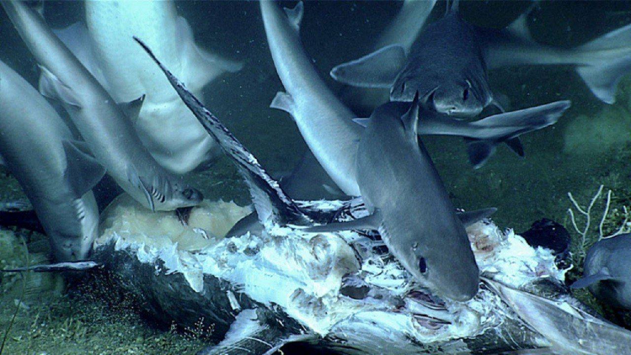 美國國家海洋和大氣管理局海洋探險研究隊6月底公布一段影像,尋找二戰沉船的遙控潛艇...
