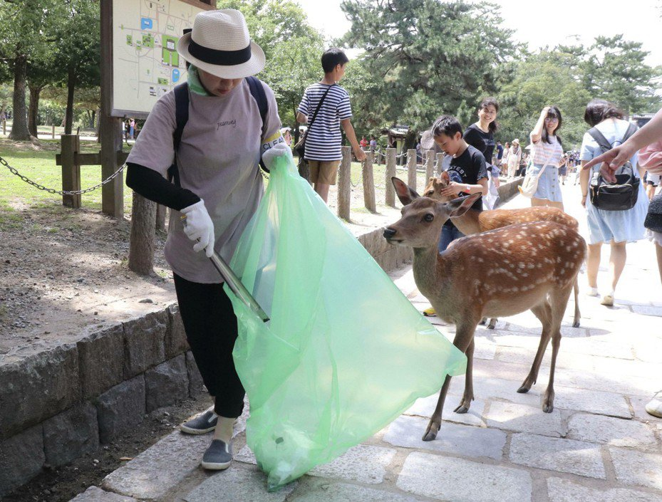 時隔8年,奈良鹿保護基金會志工10日再次展開清掃垃圾活動。美聯社