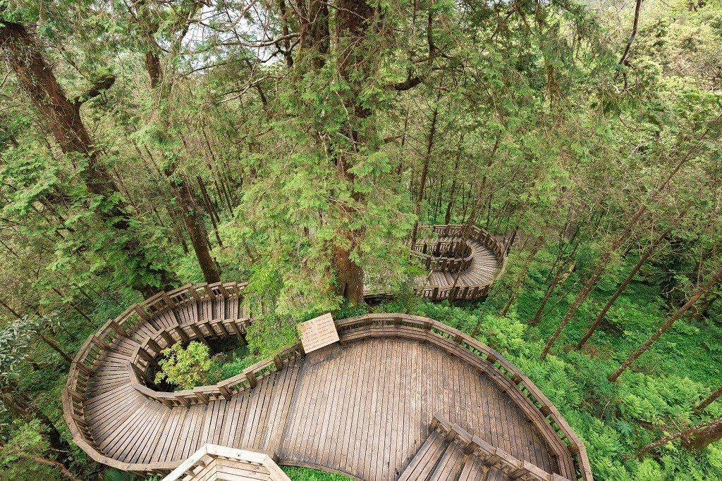 宜蘭威斯汀推出馬告神木園導覽行程。宜蘭力麗威斯汀/提供