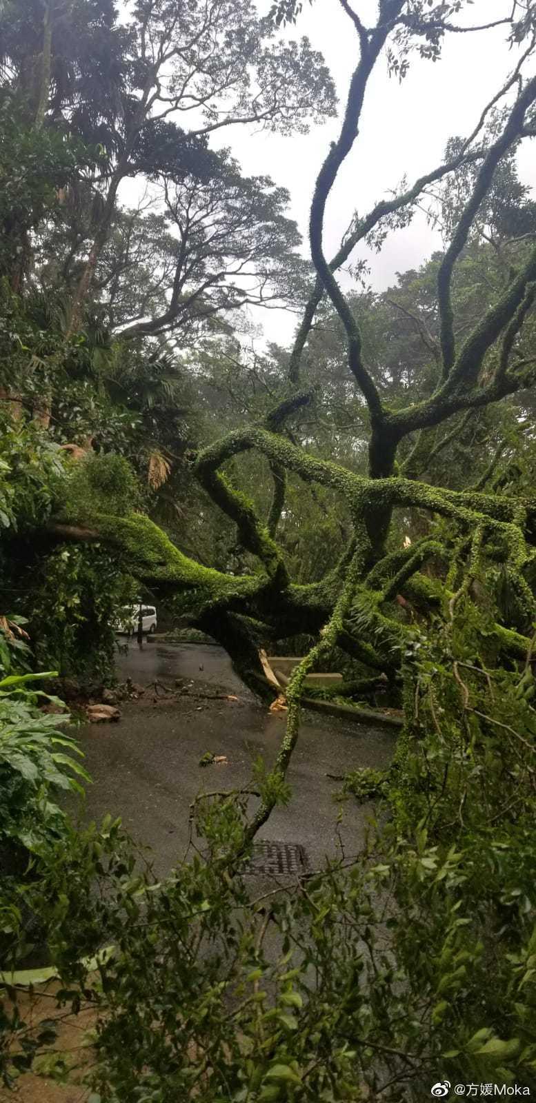 一顆大樹倒在路邊,讓方媛受困山上5小時。 圖/擷自方媛微博