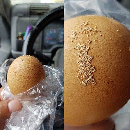 雞蛋殼上黏滿白色顆粒,實為雞隻營養不良所產生的分泌物。圖擷自爆廢公社公開版
