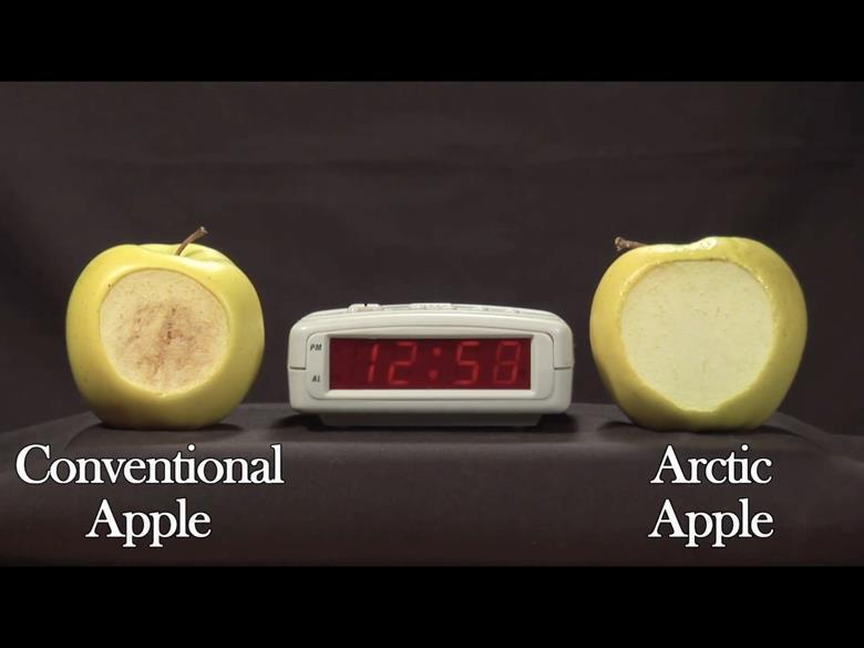 左邊為一般市售蘋果;右邊為OSF公司的基改不褐變蘋果,兩者放置12小時後的變化比...