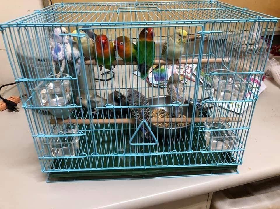 嘉義縣番路鄉佛教義德寺4日舉辦兒童夏令營,放生逾百隻小鸚鵡,害死很多鳥寶,遭鳥友...