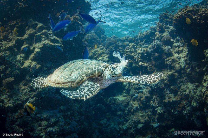 根據研究,全世界有32%的塑膠垃圾流入大自然造成海洋汙染,我們也不時能看到海龜被...