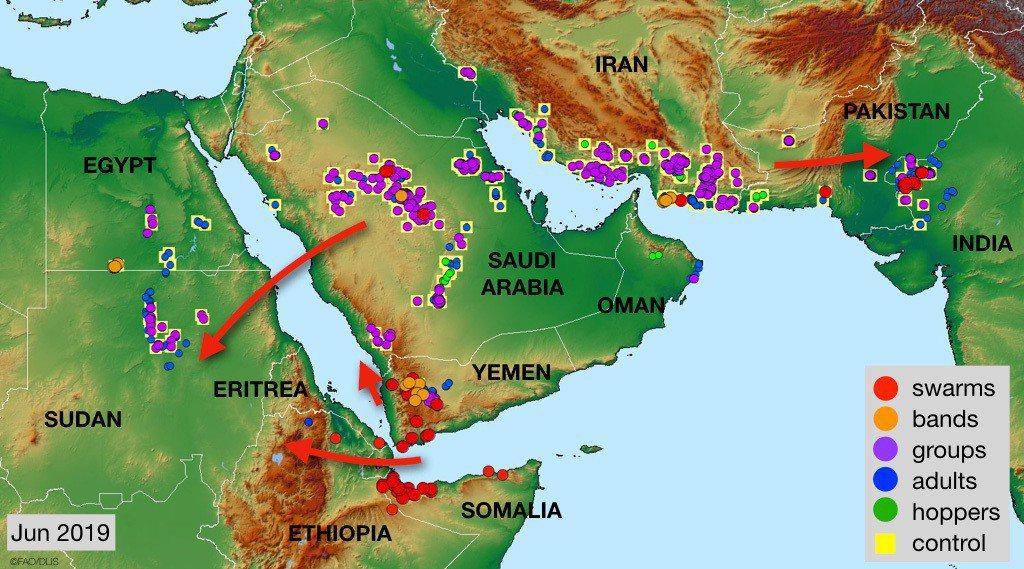 這次沙漠蝗災的擴散路線圖。從葉門開始,蔓延到非洲、阿拉伯半島,途經伊朗之後,抵達...