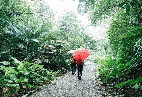 離捷運站不遠的富陽自然生態公園,能沿著步道一路登向福州山。 (攝影/楊雅淳)