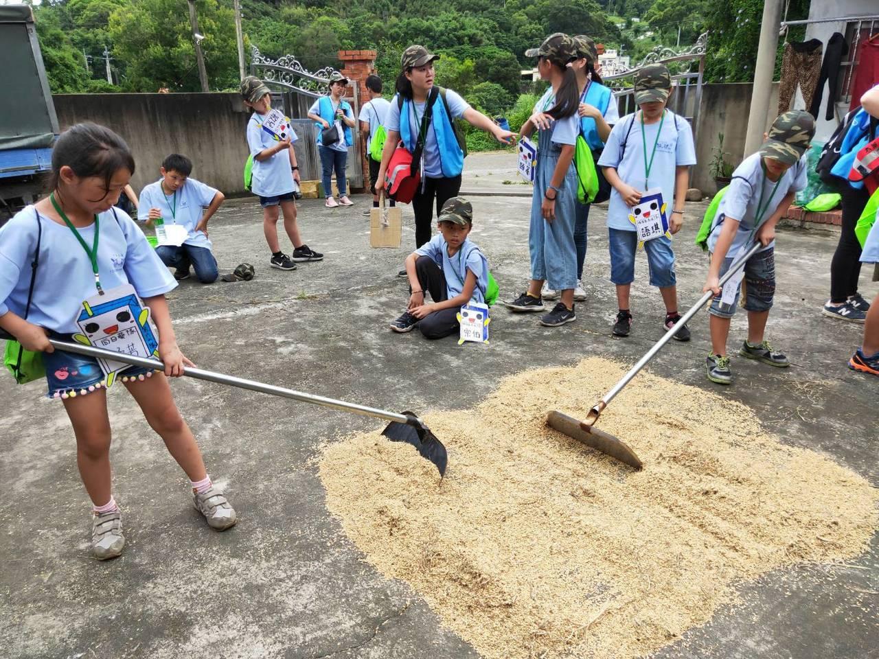 苗栗家扶中心舉辦綠光夏令營,安排學童們到稻田動手收割石虎米,並體驗曬榖。圖/苗栗...