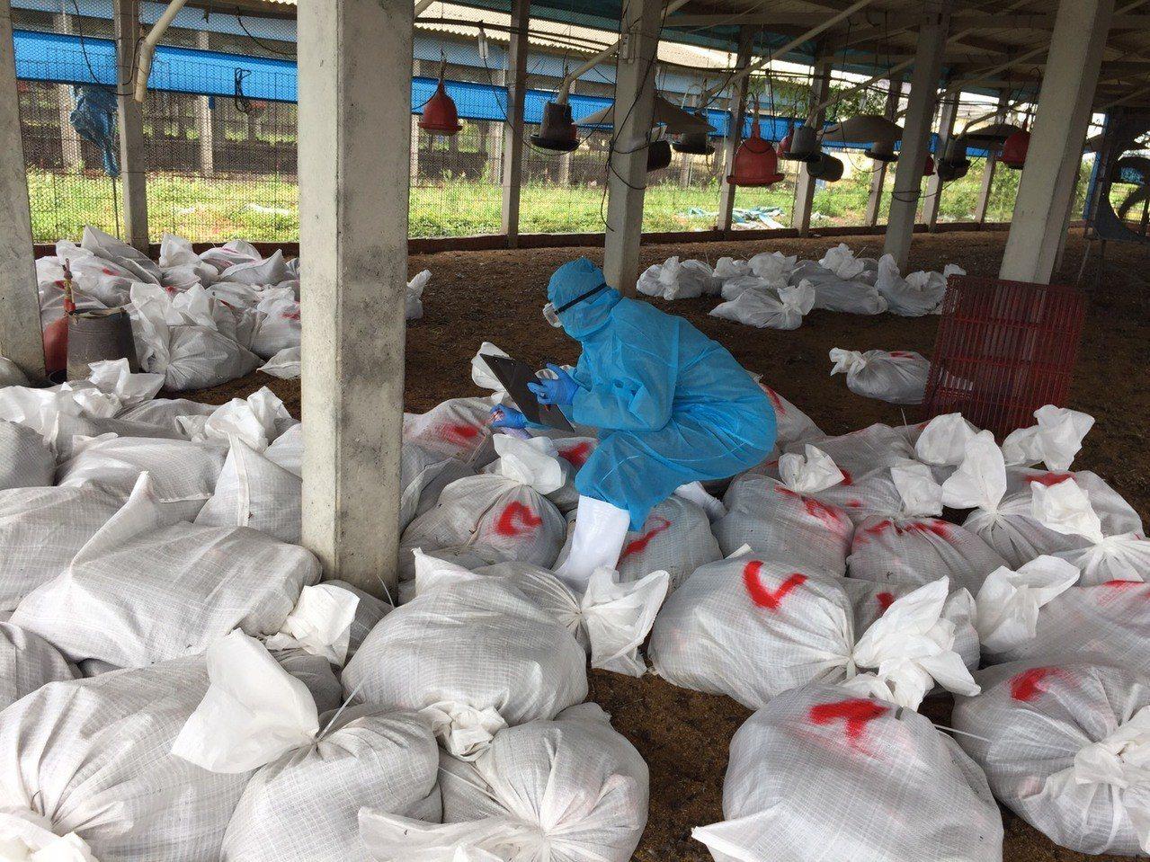 彰化縣是畜禽產業大縣,每年送到化製廠處理的死亡畜禽重量多達1萬多公噸。圖為縣府防...