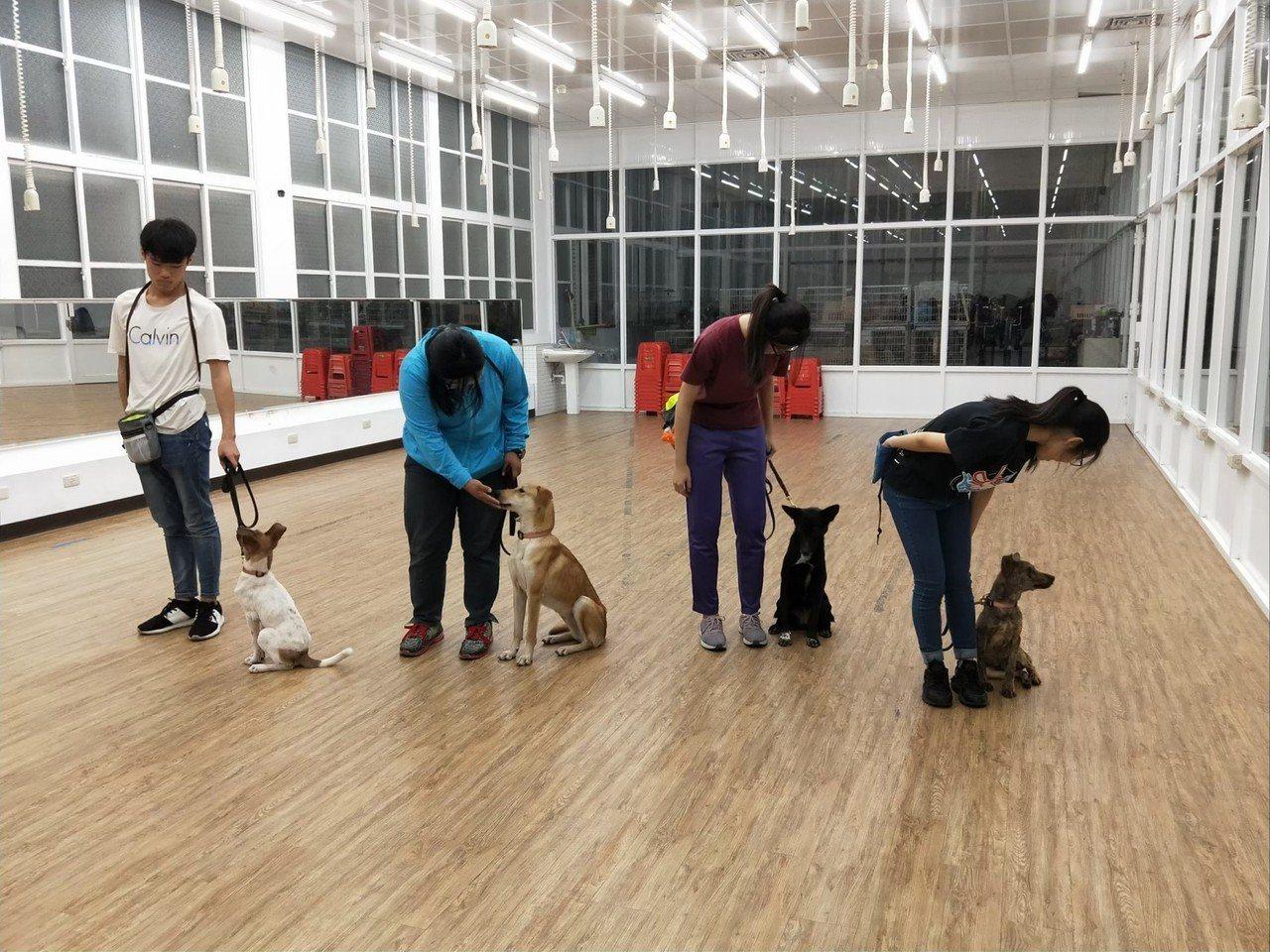 高雄市農業局動物保護處為增加公立動物收容所流浪犬認養率,今年與屏東大仁科技大學等...