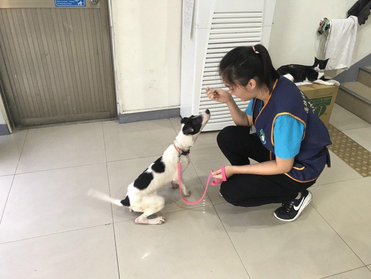 高雄市農業局動物保護處與屏東大仁科技大學等單位合作,加強推動收容所犬隻基本服從訓...