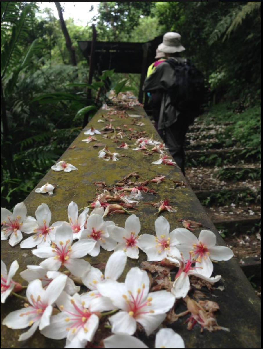 作家劉克襄在苗栗淺山一帶的石虎進香團輕旅行,這天是走訪三義、魚藤斷橋、三櫃、后里...
