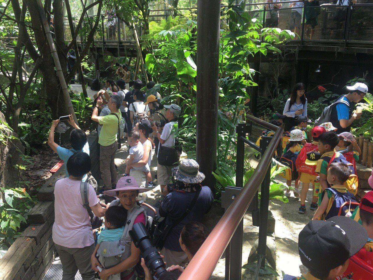 動物園穿山甲館新開幕,人潮川流不息。記者魏莨伊 / 攝影