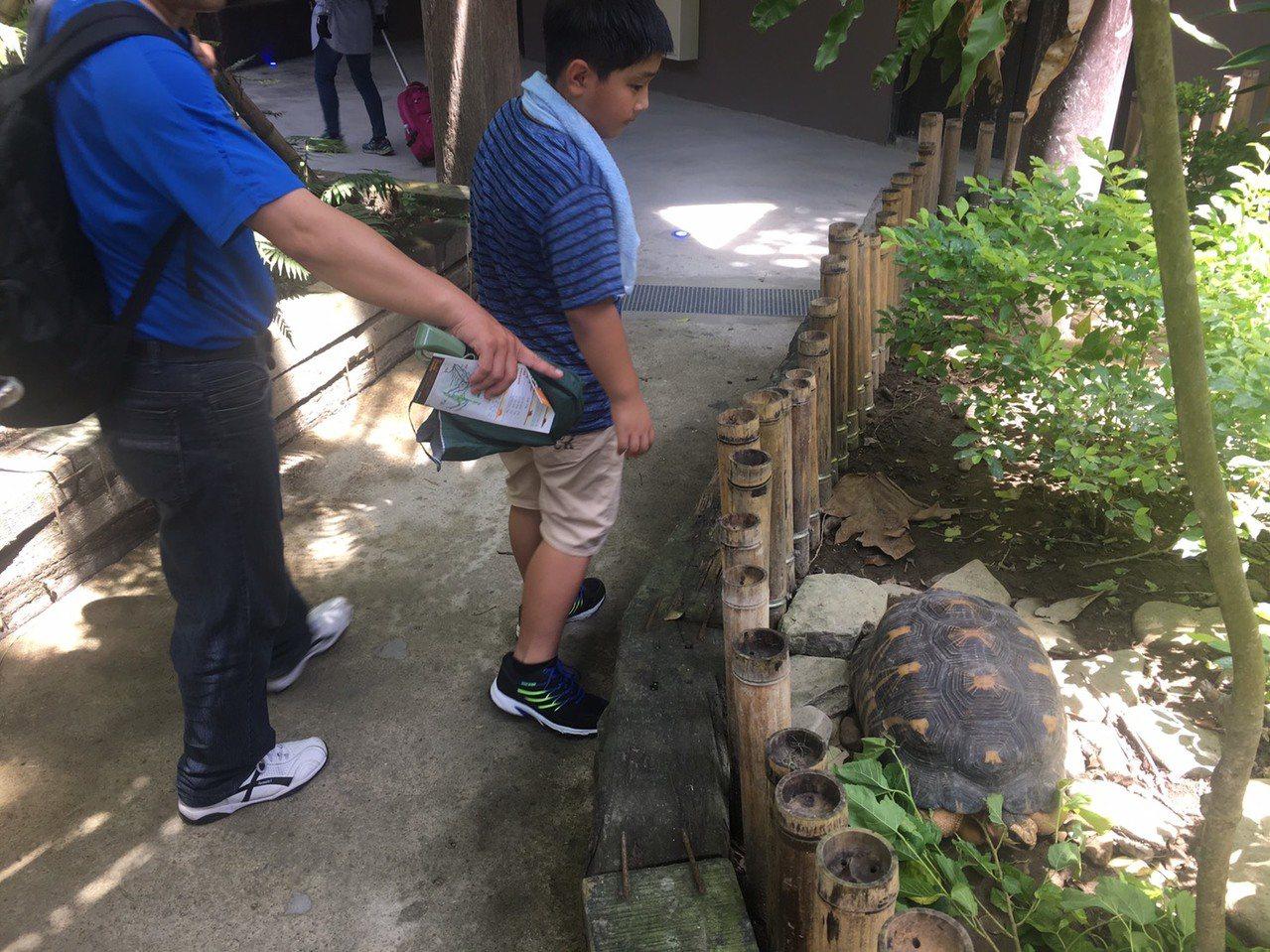 走進穿山甲館內,與動物的近距離接觸,是穿山甲館最為人津津樂道的原因。記者魏莨伊/...