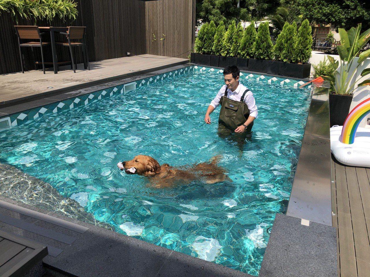 沃夫寵物旅館一樓基地面積達120餘坪,規劃有7米乘3米的超大型泳池,跟廣闊的室內...