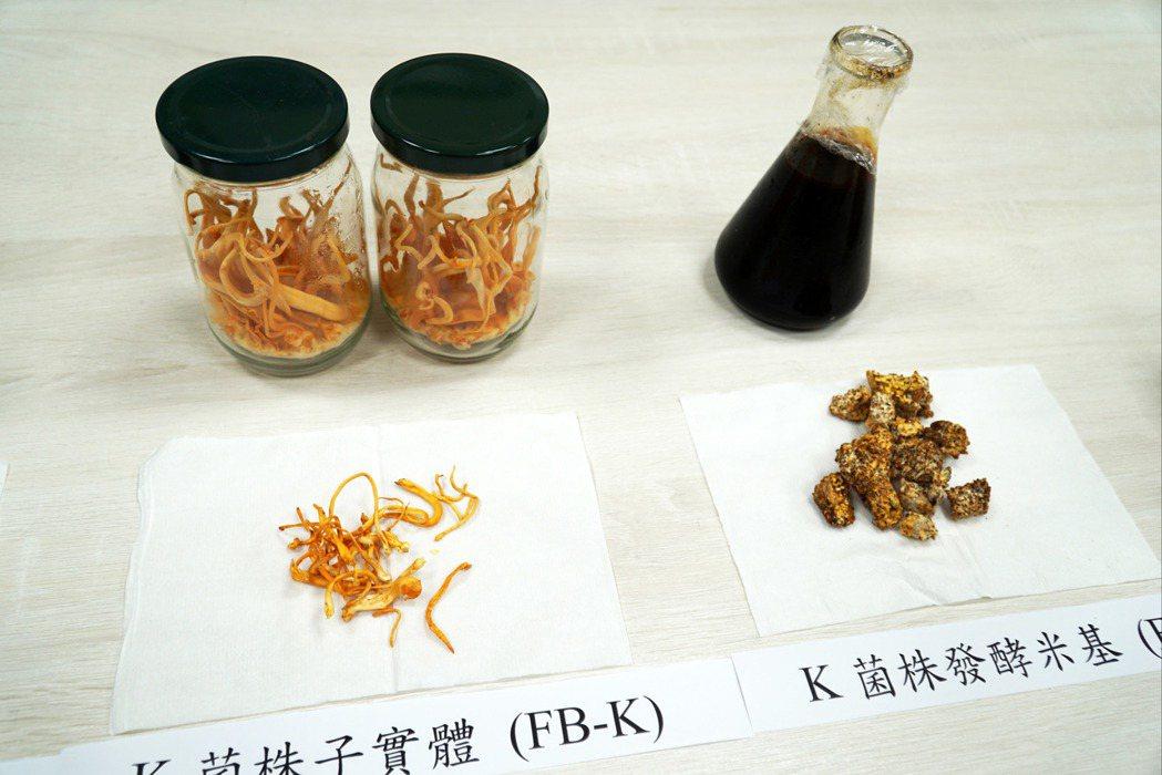 大葉大學生資系梁志欽教授與彰基合作,研究蛹蟲草子實體與發酵米基的抗乳腺癌能力。 ...
