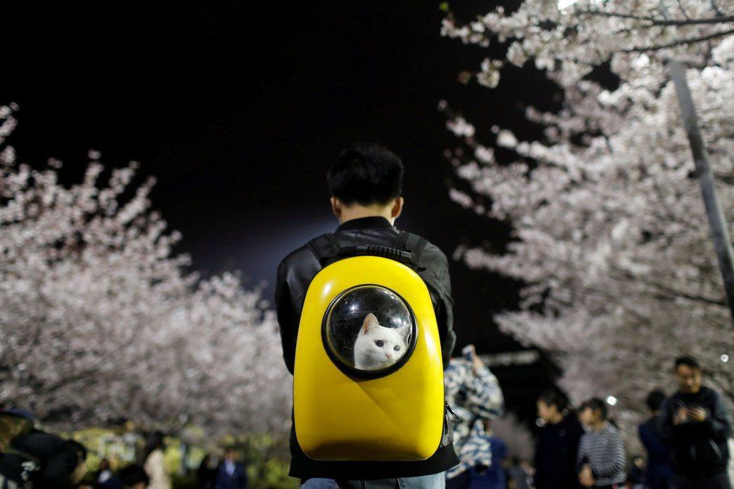 若要在台灣推動露西法案,應先從大眾動保意識開始。圖為示意圖。 圖/路透社