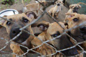 吳昱賢/露西法案在台灣(一):立法禁止寵物買賣有用嗎?