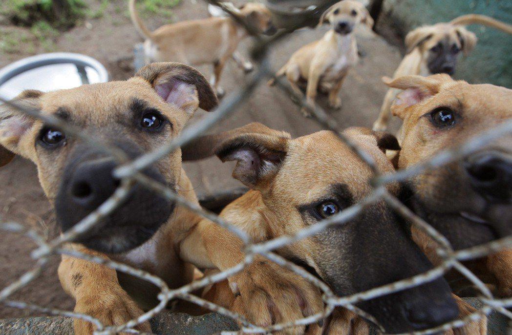 從制度面來看,在台灣推行「露西法案」,禁止買賣幼犬貓可行嗎?圖為示意圖。 圖/美聯社