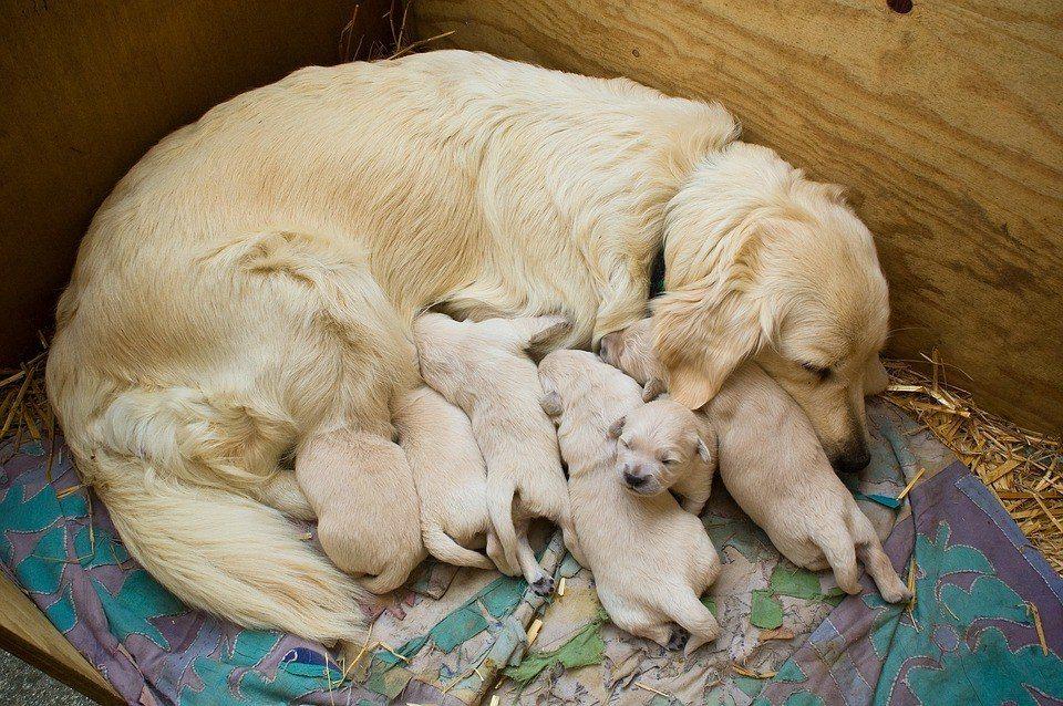 消費者若是對於購買動物的出生環境、父母健康狀況有「求知欲」,就能促使寵物業品質提升。圖為示意圖。 圖/pixabay