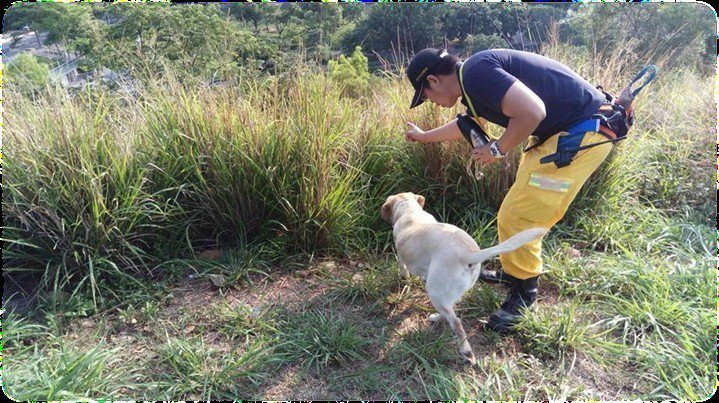 搜救犬「鐵雄」憑藉家屬提供失踨者物品的氣味,帶著搜救人員發現失蹤者。圖/台中市政...