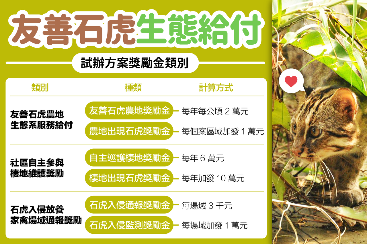 農委會林務局「友善石虎生態服務給付」上路。圖/農委會提供