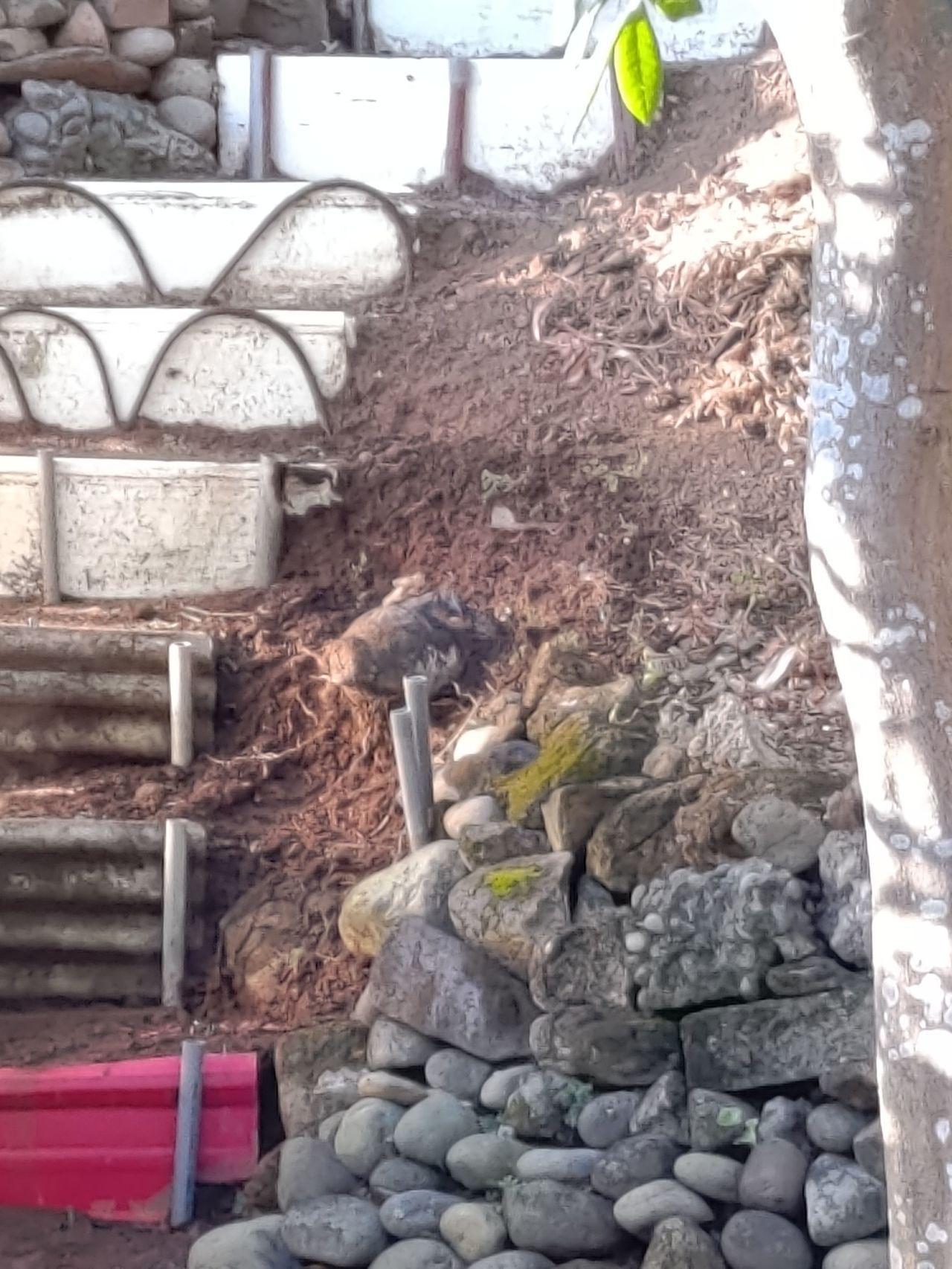 新北市淡水區民宅後面山坡地發現未爆彈。記者林昭彰/翻攝