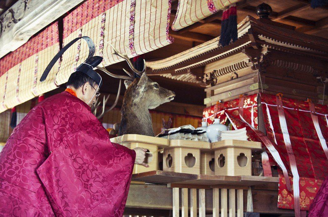 圖為諏訪大社的「御頭祭」。御頭祭過去是宰殺75頭鹿和各種獸肉之後陳列遊行的祭典,...