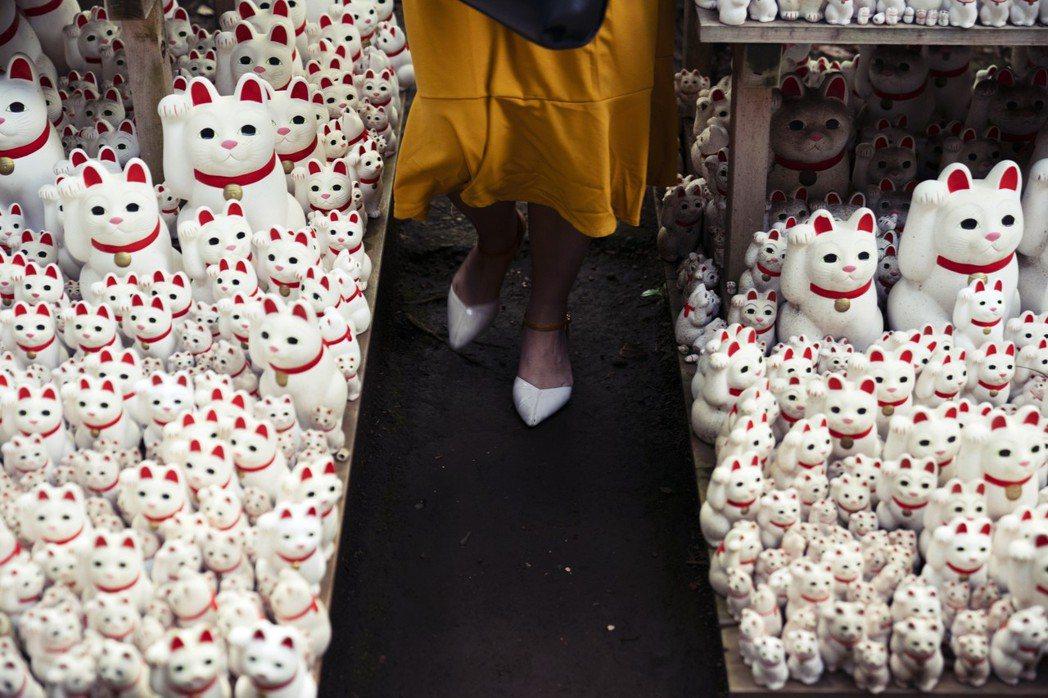 東京豪德寺:井伊家藩主在一場偶然因為被貓帶進寺院而躲過雷雨,後來寺院就以貓當成吉...
