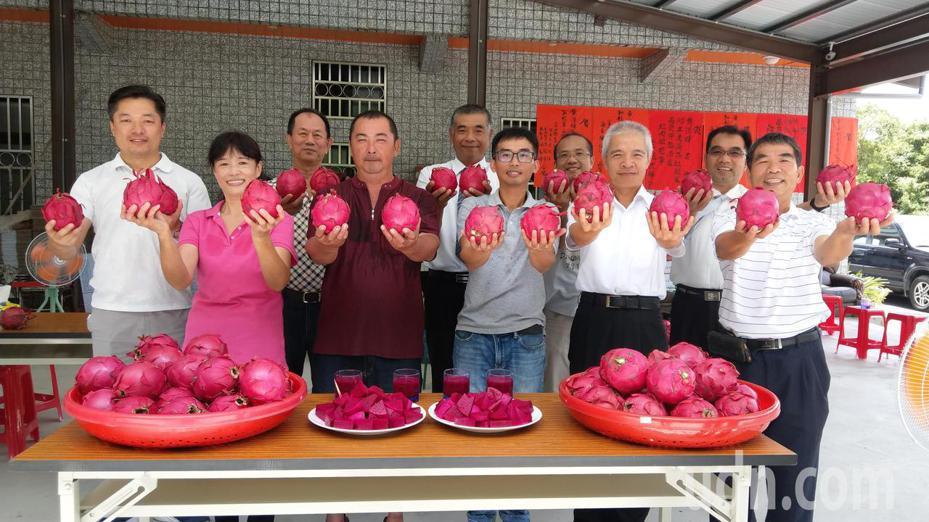 員山紅龍果果農勇奪「紅肉」及「甜王」雙冠,其中甜王達23.7度,口感與風味一級棒。 記者戴永華/攝影