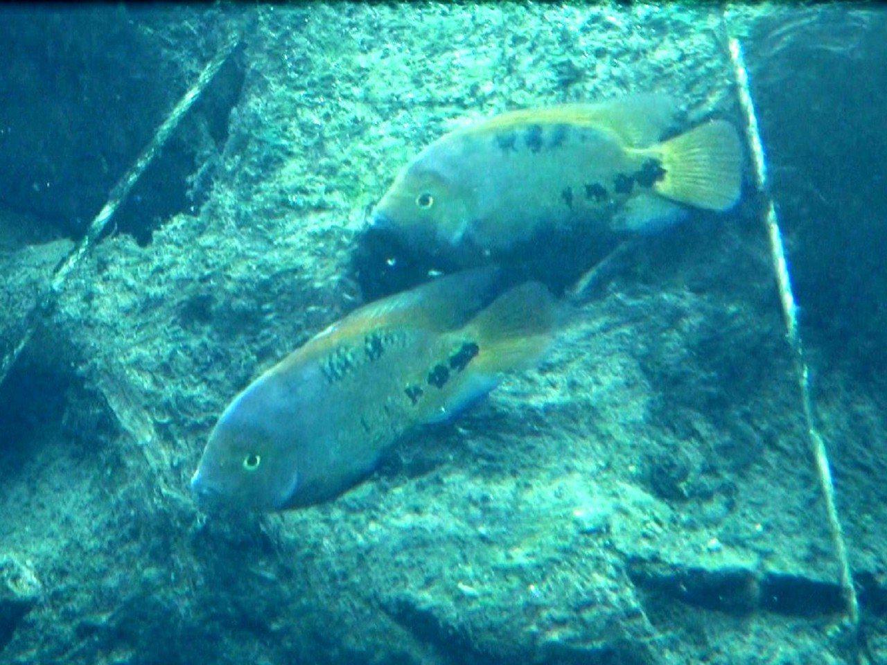 不妨在熱帶雨林的穿山甲館多觀察留意,看看生態魚缸中,有沒有半透明的小魚苗。圖 /...