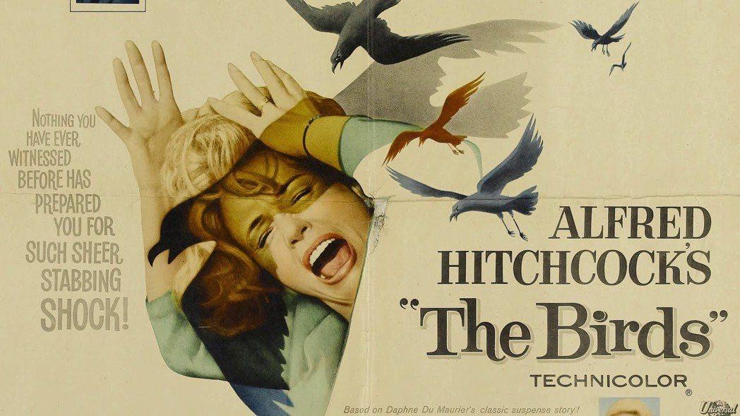 導演希區考克的電影「鳥」劇照。網路照片