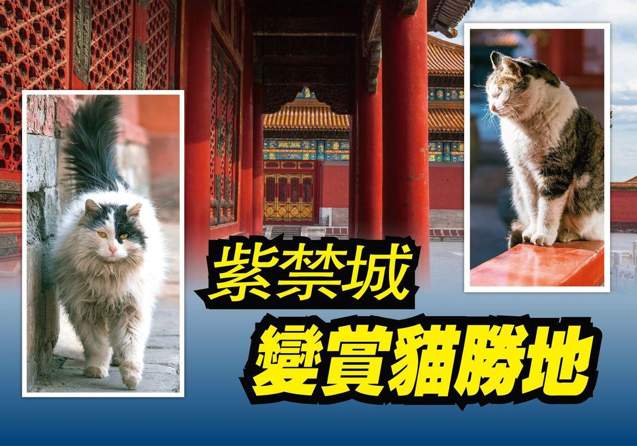 北京故宮變賞貓勝地,吸引很多旅客前來。圖/翻攝自ixuebai微博圖片、鳳凰藝術...