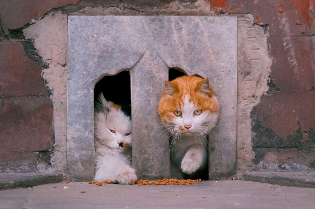 貓咪膽小兒和小膽兒常住在此地。圖/翻攝自ixuebai微博圖片