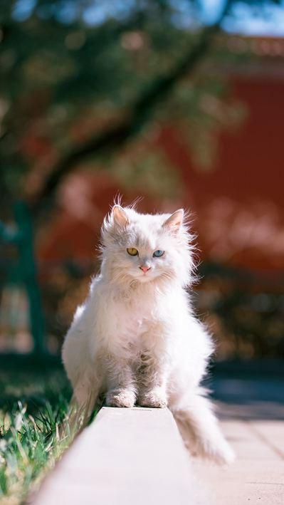傳聞故宮有二百多隻貓。圖/翻攝自ixuebai微博圖片