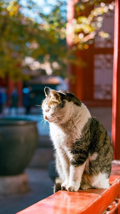 貓咪小崽兒,是珍寶館裡最有名的御貓!個性親人,可惜去年已經變成了小天使。圖/翻攝...
