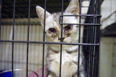 吳宗蓉/露西法案在台灣(二):禁止「第三方販售」寵物可行嗎?