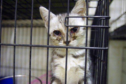 露西法案在台灣(二):禁止「第三方販售」寵物可行嗎?